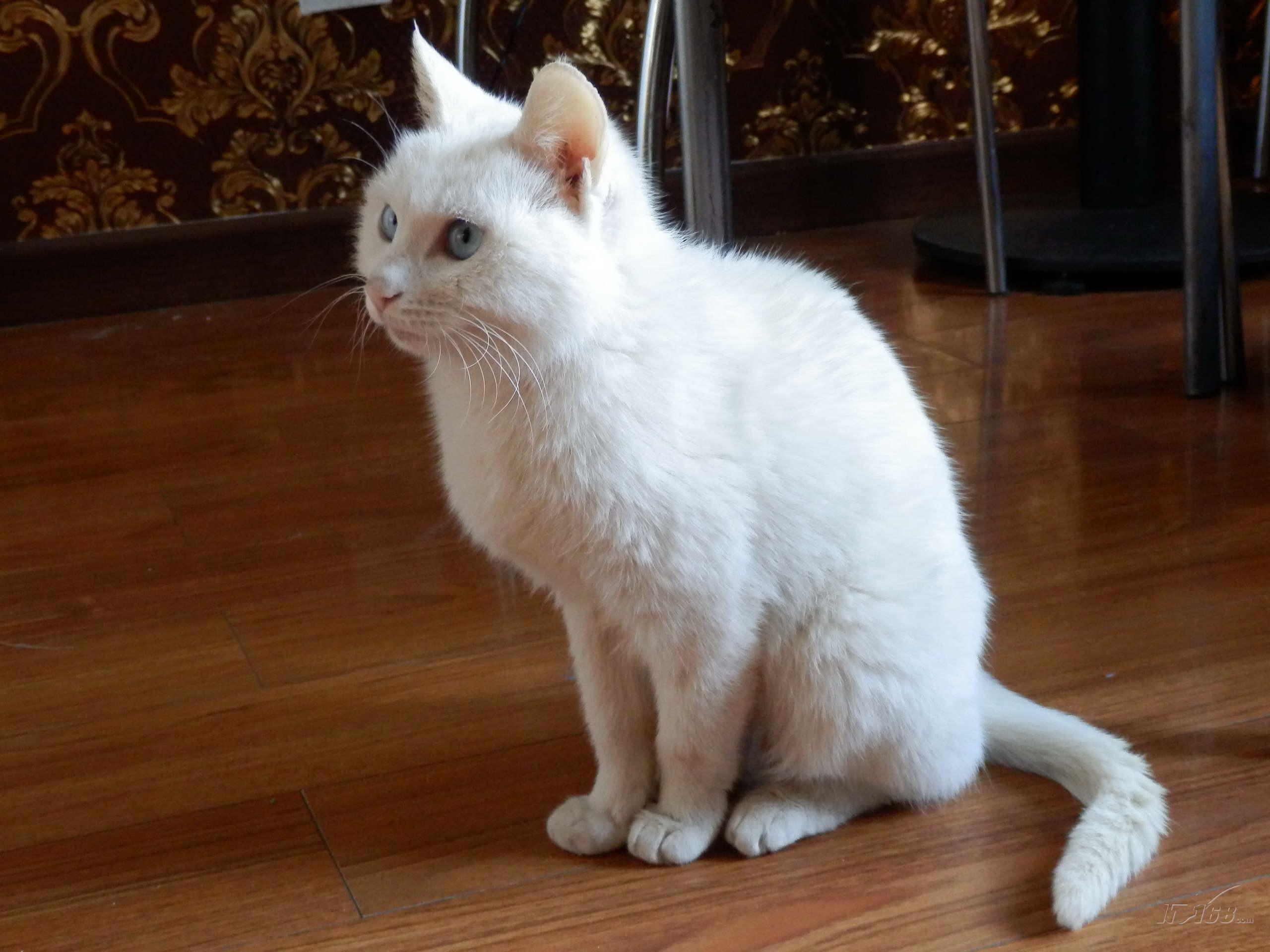壁纸 动物 狗 狗狗 猫 猫咪 小猫 桌面 2560_1920