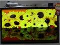 夏普 LCD-46LX440A 46英寸超窄边网络LED电视实景图片3