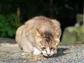 松下 GF5 微单相机动物样张图片4