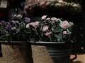 三星 2016版Galaxy A9(A9000)全网通4G手机样张图片8