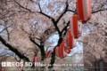 佳能 EOS 5D风景样张图片5