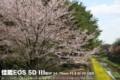 佳能 EOS 5D风景样张图片9
