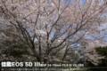 佳能 EOS 5D风景样张图片10