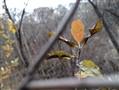 诺基亚 8样张图片4